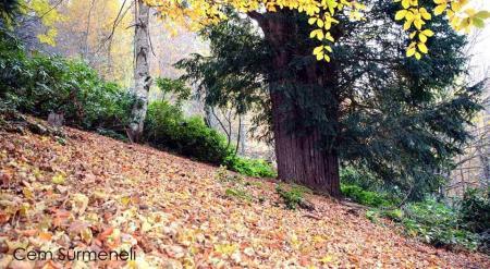 4 bin 117 yaşındaki Porsuk ağacı Tabiatın Sessiz Tanıkları: Anıt Ağaçlar' kitabında
