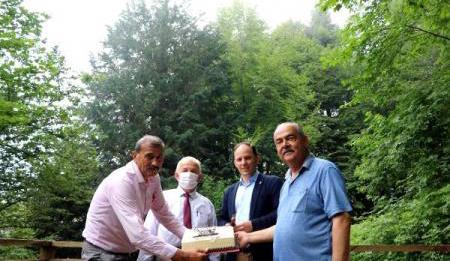 4117'nci yaşına giren dünyanın en yaşlı porsuk ağacına doğum günü pastası kesildi